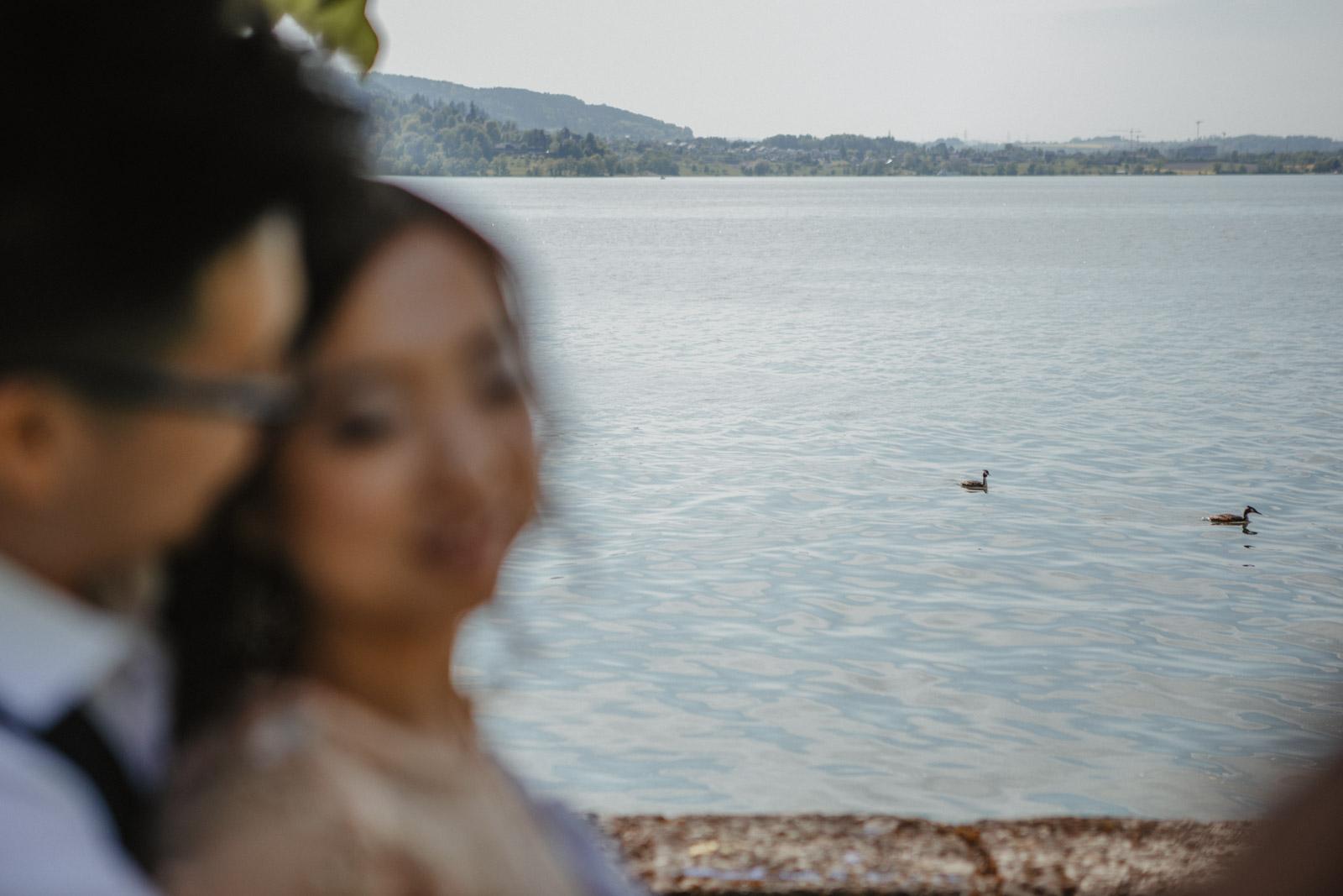 Enten auf dem Zugersee mit Brautpaar im Vordergrund